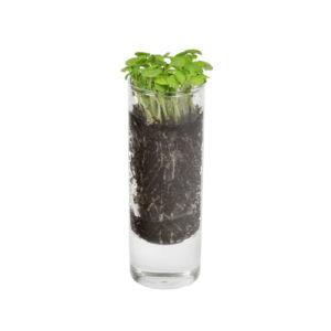 Pflanzenglas mit Wunschsamen